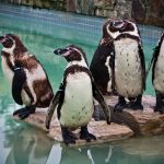 SEAVIEW WILDLIFE ENCOUNTER CLOSES AFTER 44 YEARS