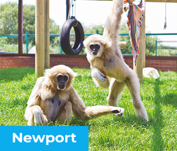 Monkey Haven - Visit us at Newport on the Isle of Wight