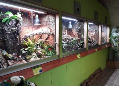 The Isle of Wight Reptilarium - A Day out with the Kids on the Isle of Wight