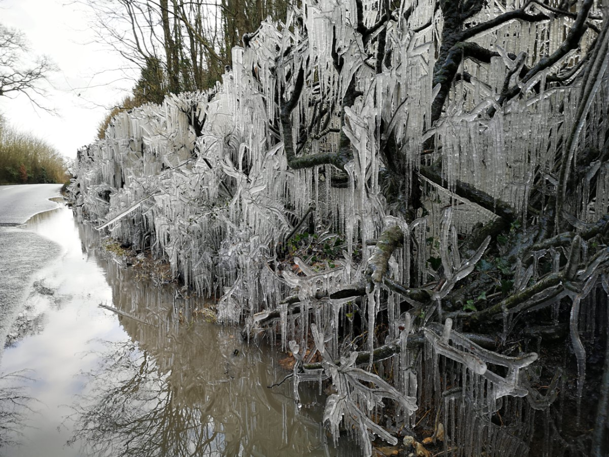Icicles on the roadside near Calbourne. in (Cath Howlett)