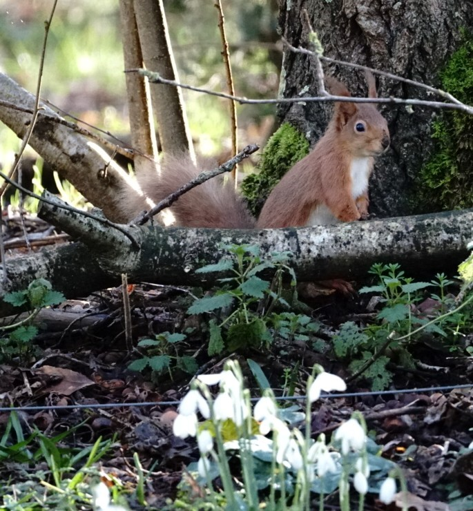 Squirrel In Isle Of Wight (jane Holland) 3