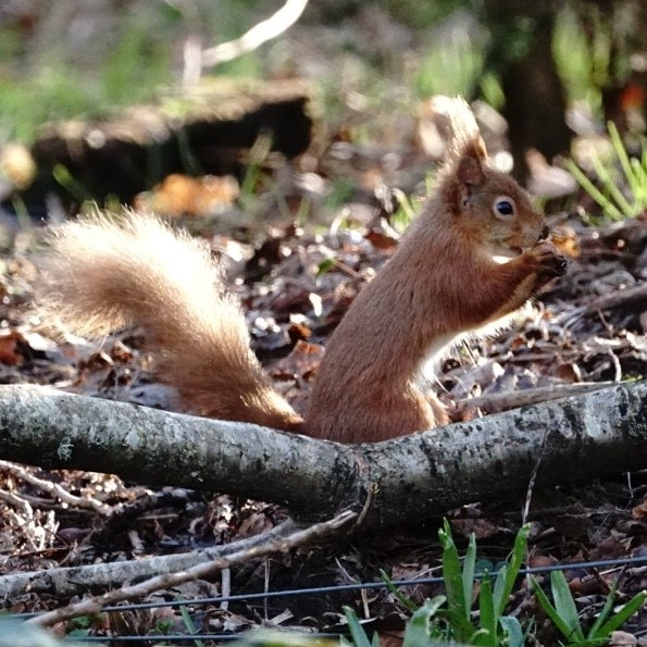 Squirrel In Isle Of Wight (jane Holland) 4