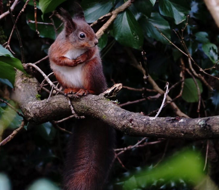 Squirrel In Isle Of Wight (jane Holland) 5