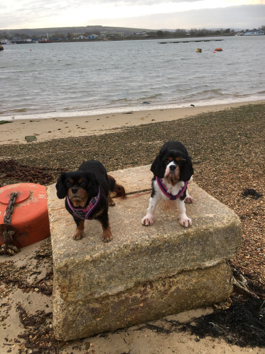 A Couple Of Old Sea Dogs! The Duver (helen Watson)