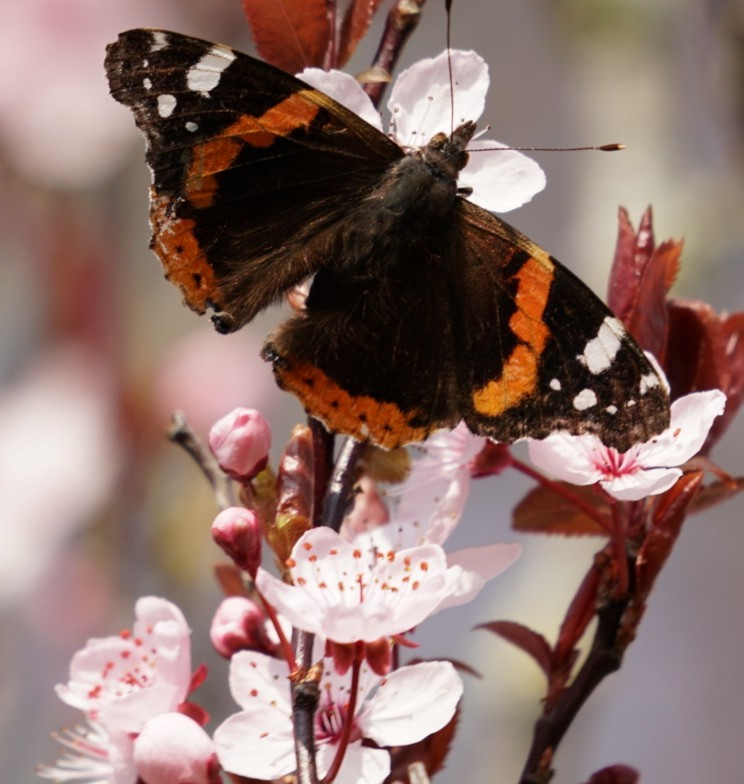 Blossom And Butterfly (jane Holland)