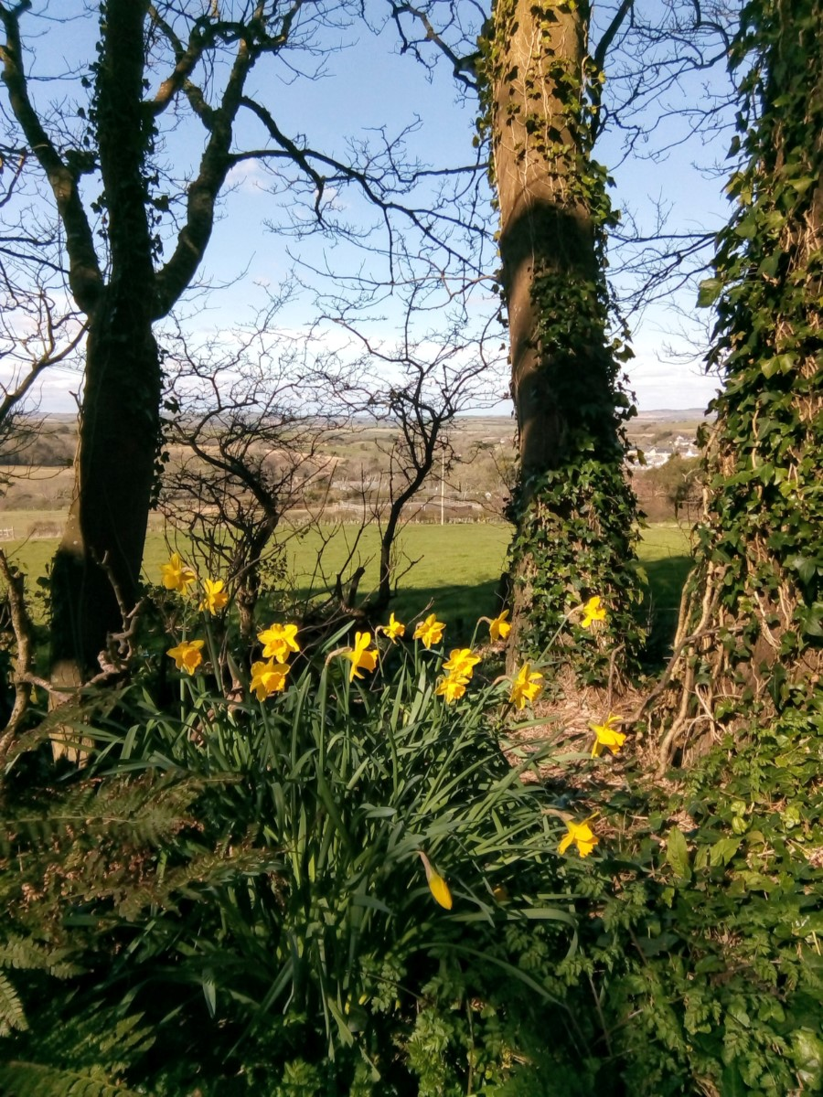 View From Ashknowle Lane Whitwell ~ Photo Credit Maureen Taylor 2