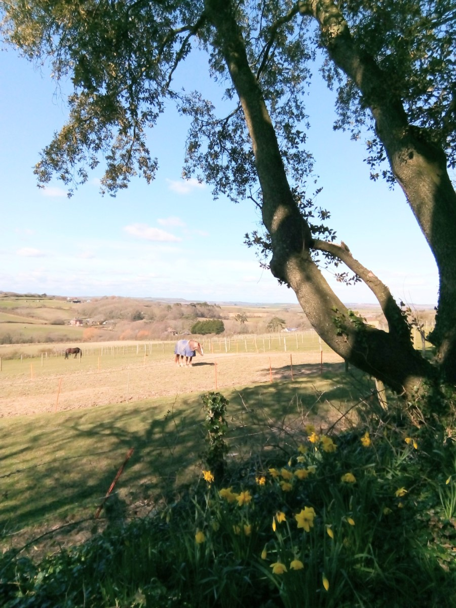 View From Ashknowle Lane Whitwell ~ Photo Credit Maureen Taylor