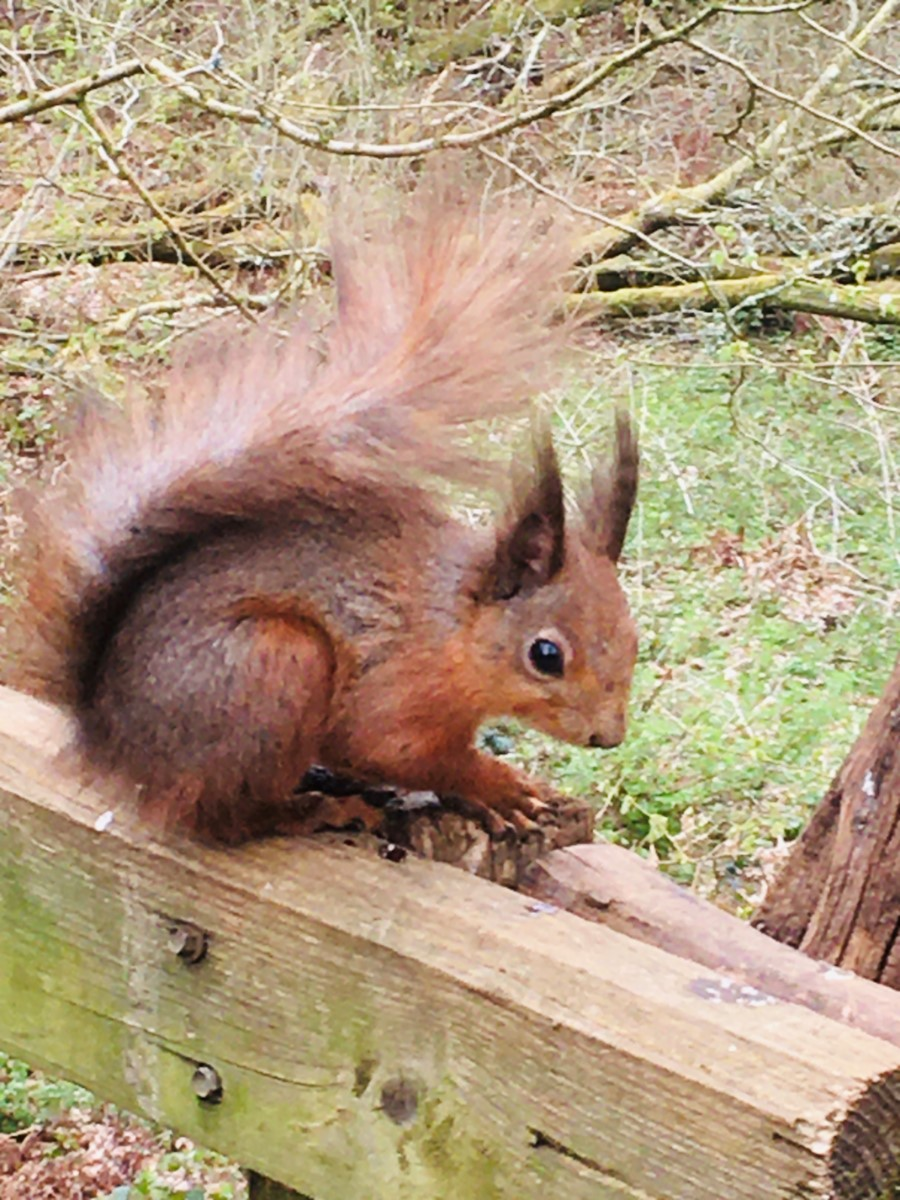 Bright Eyed And Bushy Tailed! Alverstone ~ Photo Credit Helen Watson