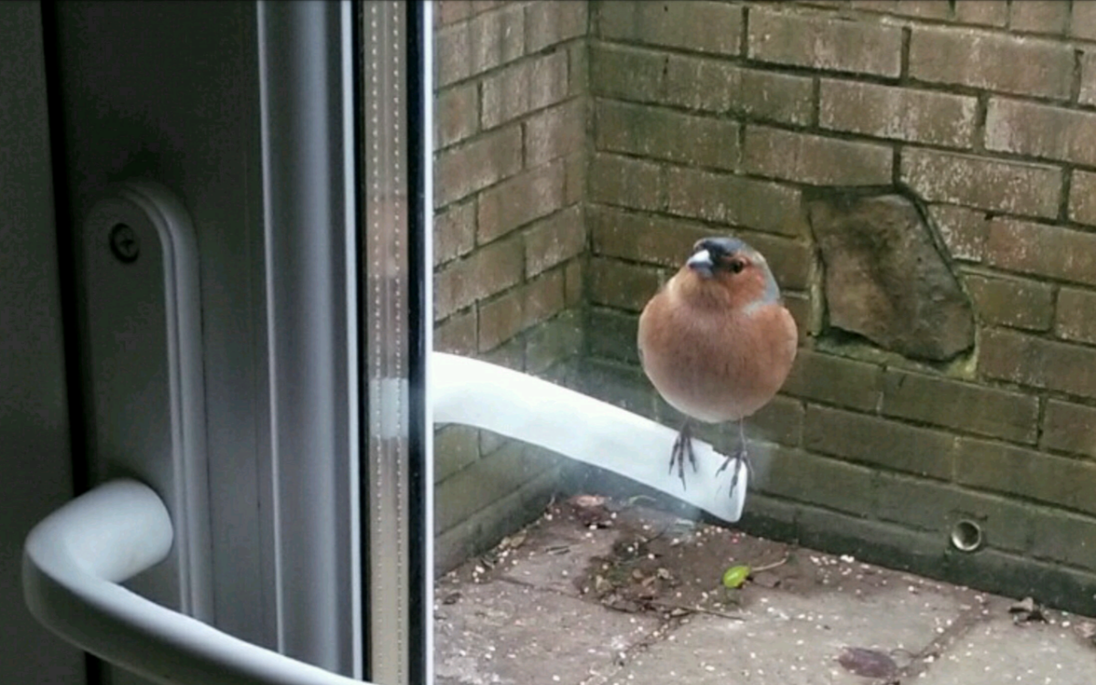 Can I Come In ~ Photo Credit Kim In Totland