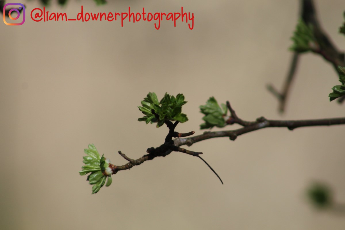 Signs Of New Growth ~ Photo Credit Liam Downer
