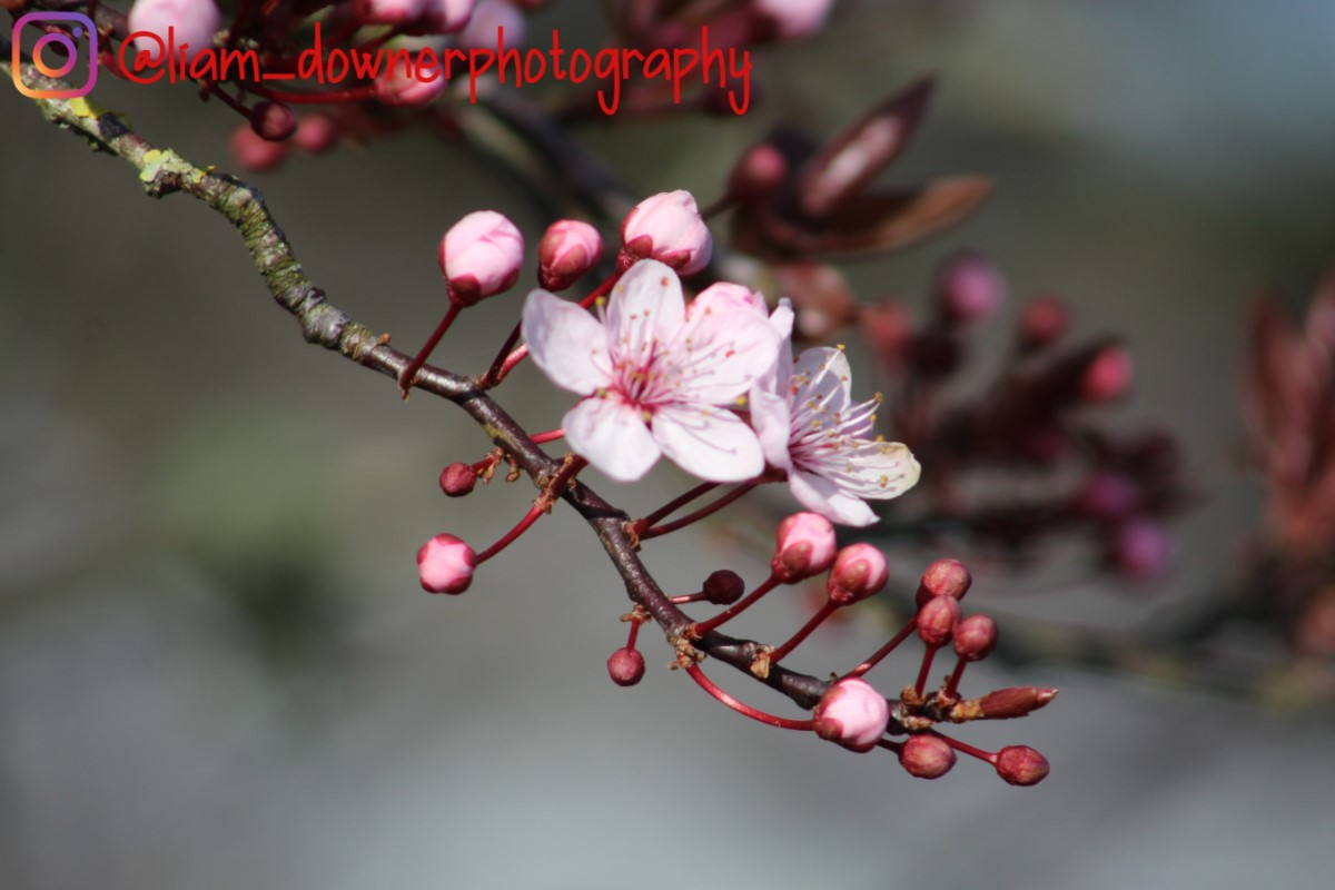 Spring Blossom ~ Photo Credit Liam Downer