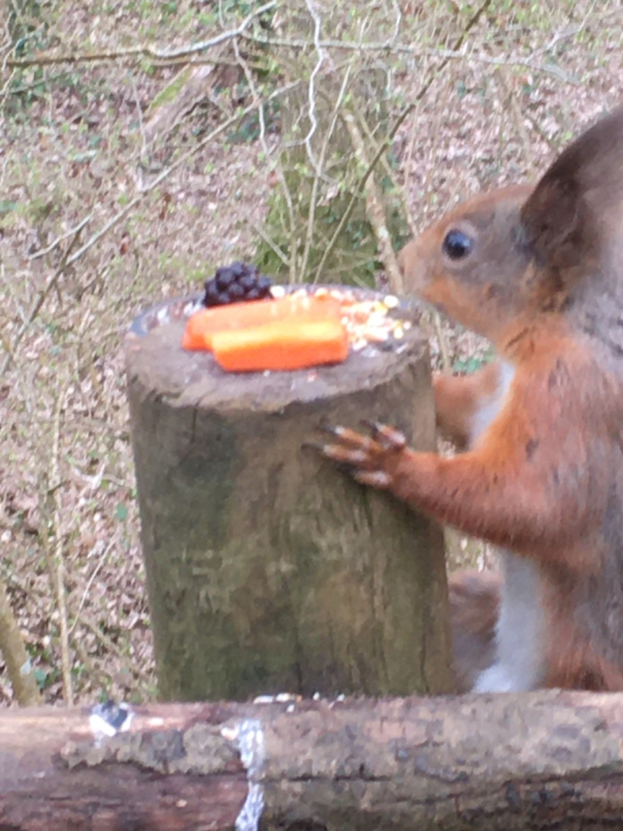 Tufty's Treats! Alverstone ~ Photo Credit Helen Watson